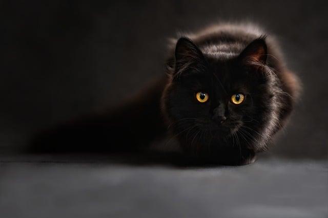 cat-694730_640