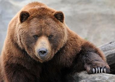 Bear_markets.jpg