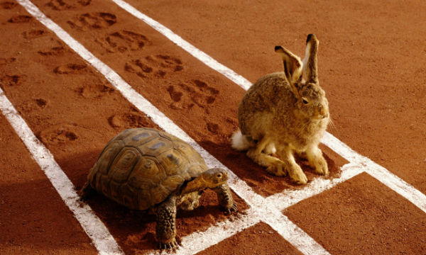Active vs Passive Investing: The tortoise and the hare
